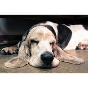 5ea69180272a2_schlafender Hund_COLOURBOX_13321149_50_40.jpg